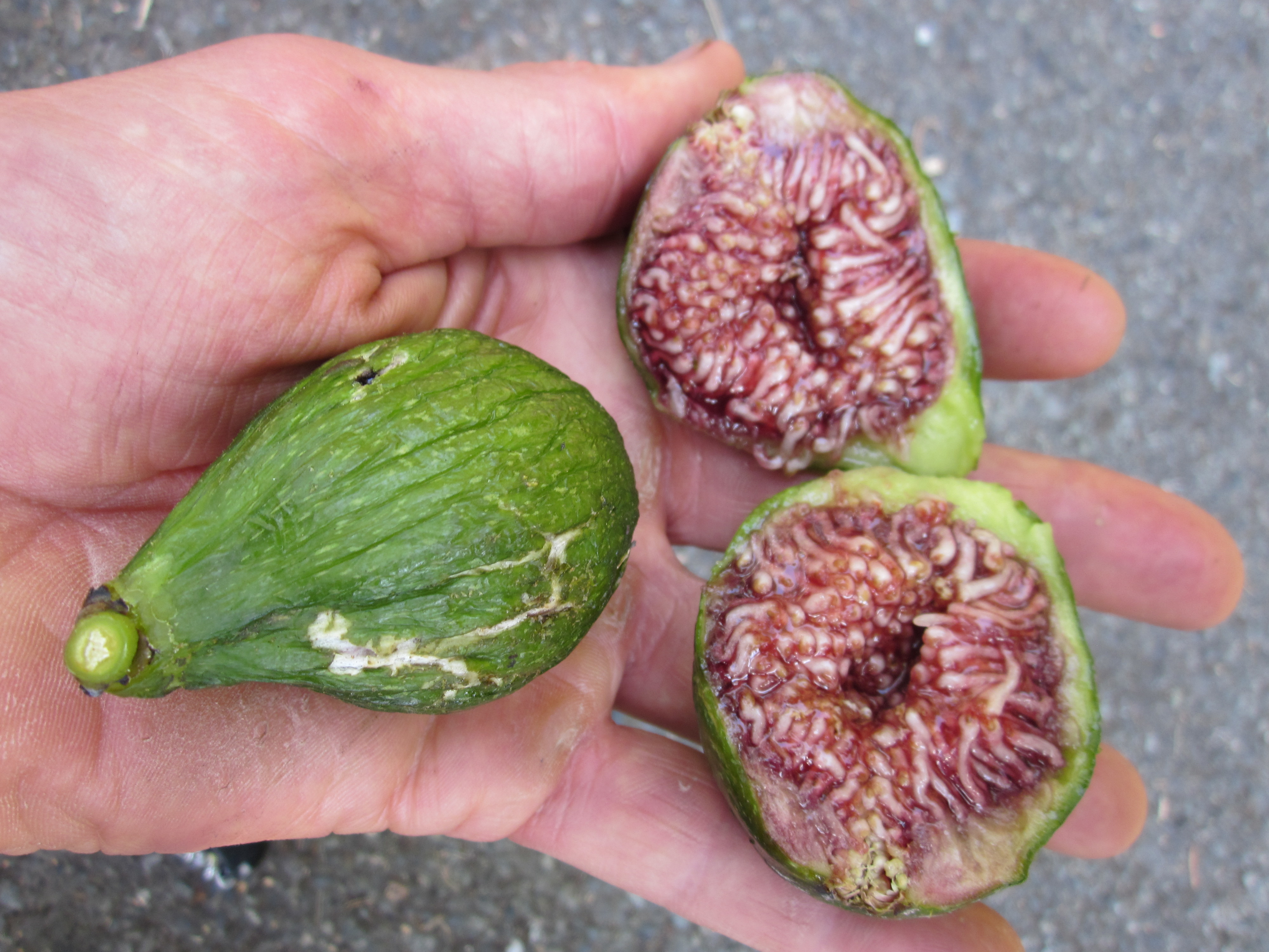 What fruit grows in Turkey In May, what can I try
