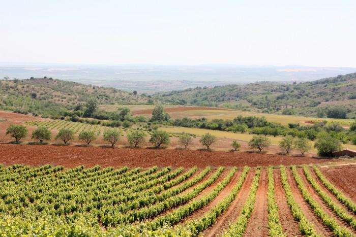 A generations-old vineyard of Grandes Vino y Viñedos, leading brand of the Cariñena Denomination of Origin