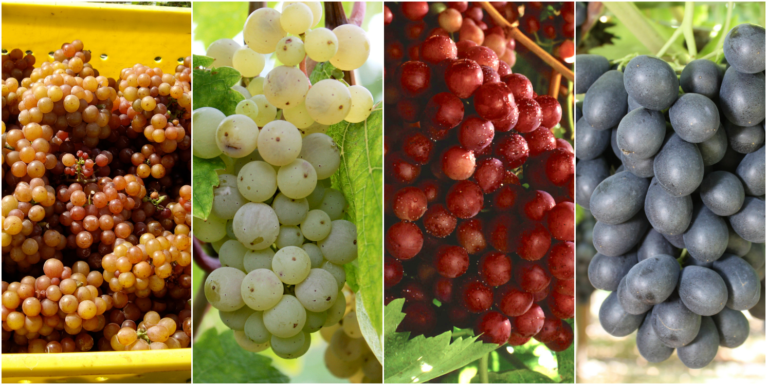 15 types of grapes to know eat and drink food republic
