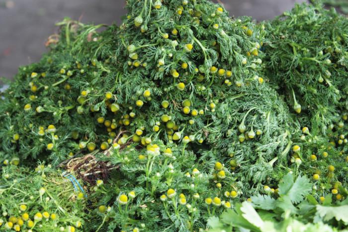Union-Square-Farmers-Market-June-4-2014-Chamomile-from-S-and-SO-Produce-Farms-by-Linnea-Covington