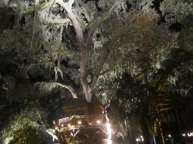 MTYM Treehouse
