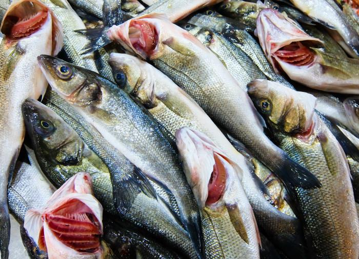 Fish showing gills
