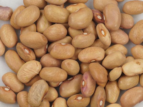 Bean-Bolita