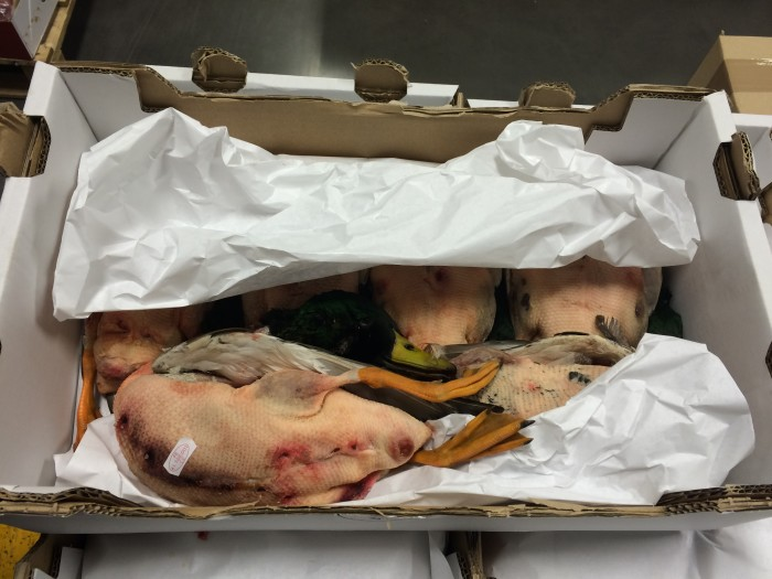 In France, wild mallard ducks are for eating, not just show. (Photo credit: Katie Chang)