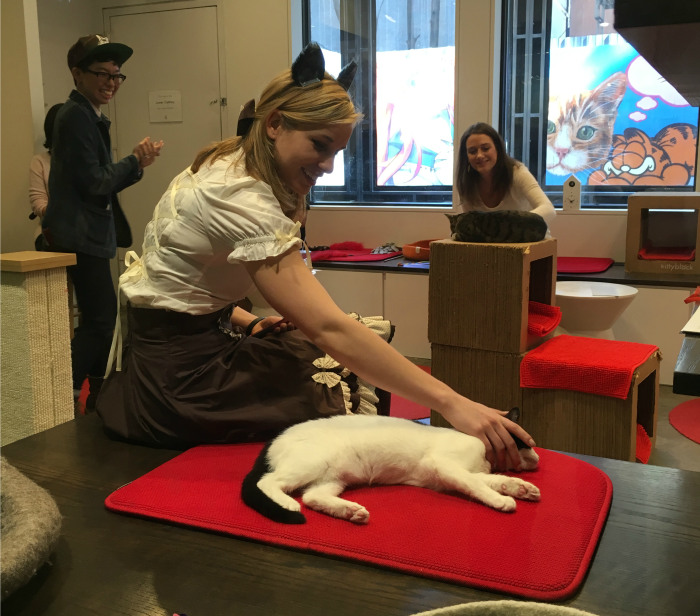 Koneko in New York City's Lower East Side is a haven for cats and cat lovers alike. (Photos: Tiffany Do.)