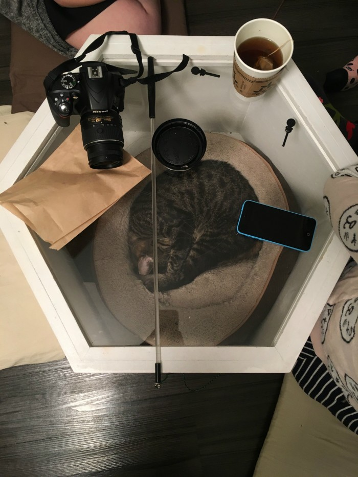 A cozy cat condo doubles as a table at Meow Parlour.