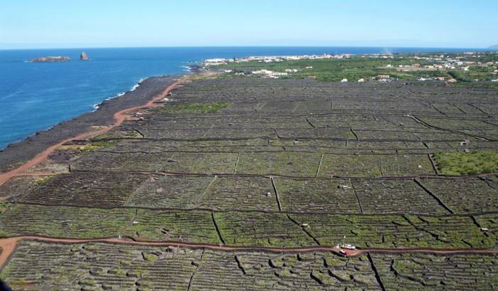 Pico wine production