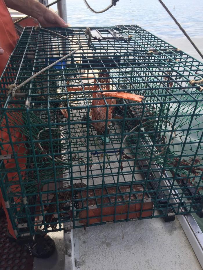 lobstertraps