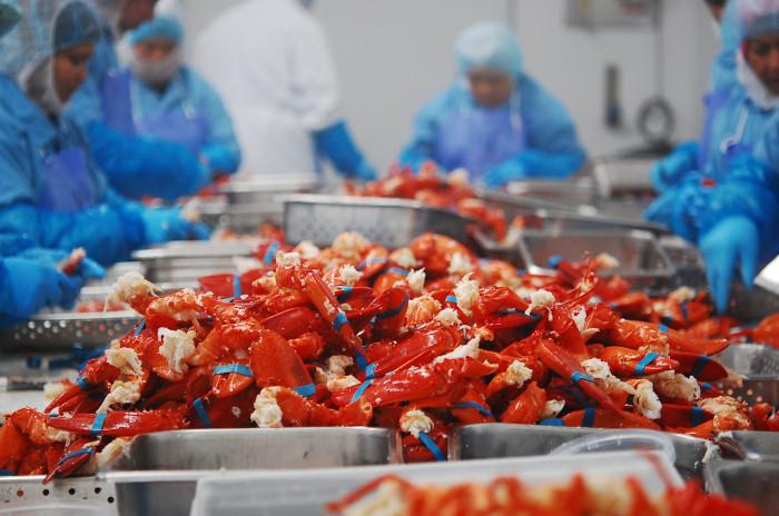 lobsterpicking