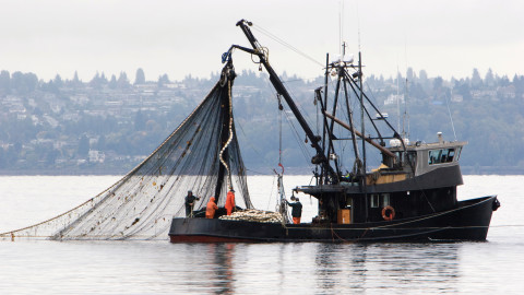 What Is Bycatch